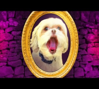 DOG LOOKS IN THE MIRROR!!