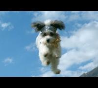 Flying Kittens vs. Flying Puppies (Slow Motion Battle)
