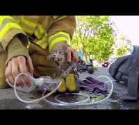 GoPro: Fireman Saves Kitten