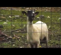Scream & Shout - will.i.am ft Britney Spears Goat Edition