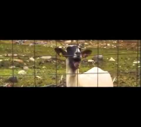 TAYLOR SWIFT-I Knew You Were Trouble (GOAT VERSION)